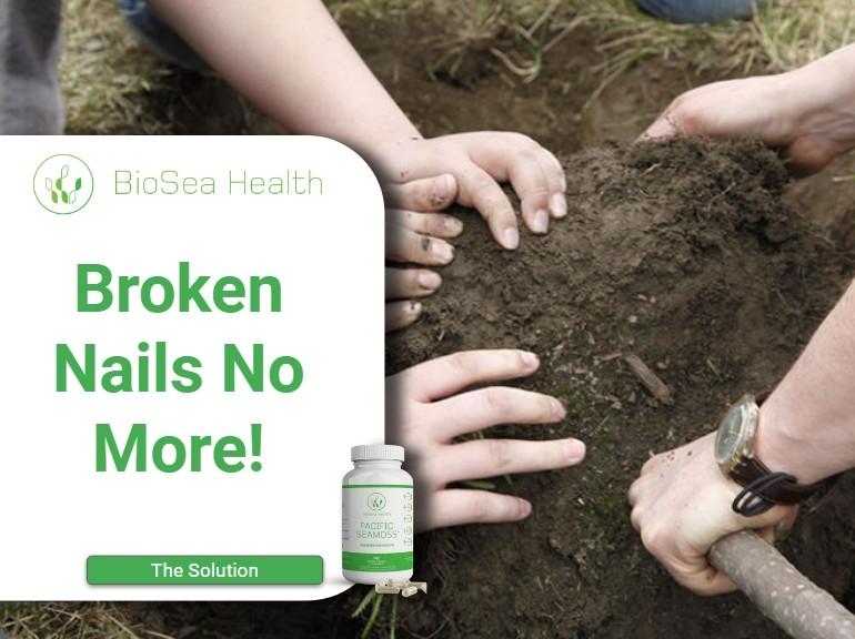 seaweed for nails repairs broken nails