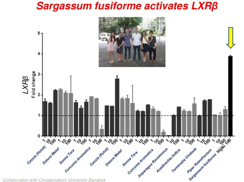 Sargassum is very active anti oxidant