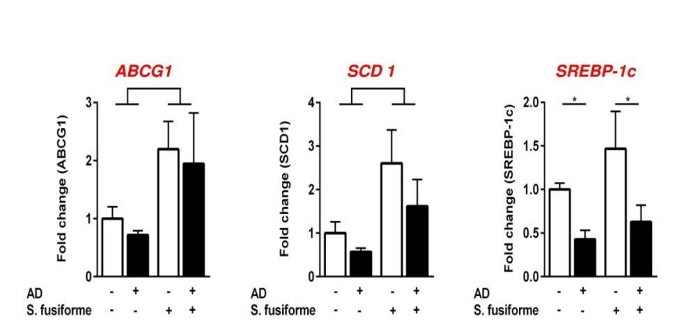 Sargassum activates LXR target genes in the brain