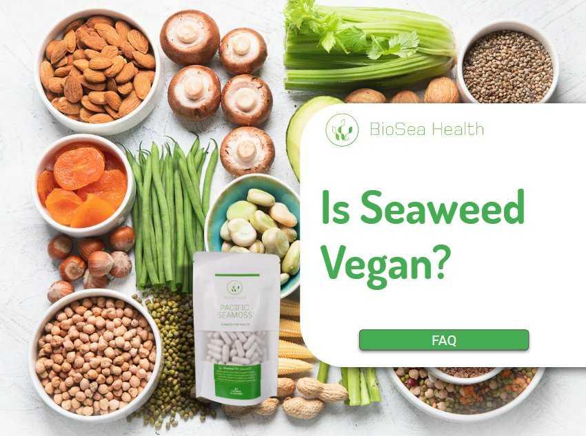 Is Seaweed Vegan? Pacific Seamoss Powder is