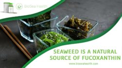 seaweeds with natural source of fucoxanthin