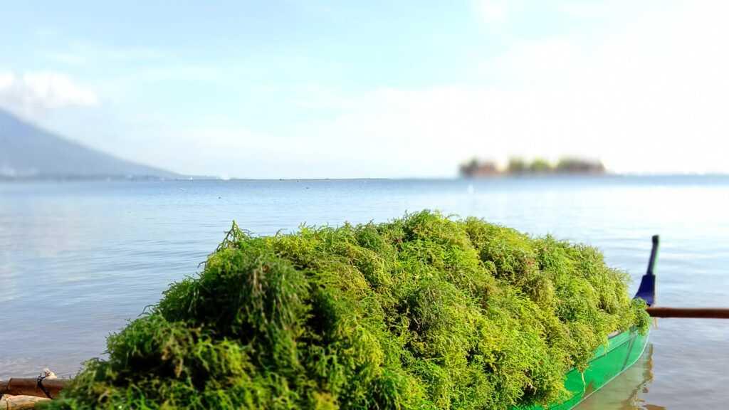 biosea health seaweed for health
